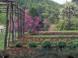 Vegetable Garden at Monticello  Thomas Jefferson's Home in Charlottesville  Virginia
