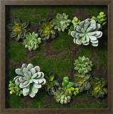 Faux Succulents III