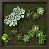 Faux Succulents Wall Decor II
