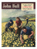 John Bull  Picking Harvesting Flowers Magazine  UK  1950