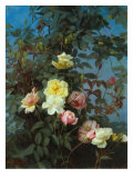 Roses  1880