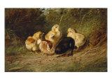 Chickens  1878