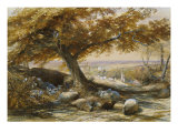 Sheep in the Shade  c1851