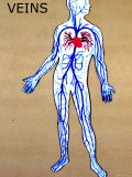Body Veins Clear Pulmonary and Systemic