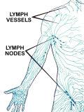 Lymphatic System Circulation of Lymph Fluid