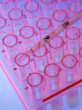 Close Up Test Tubes in Rack with Pipette