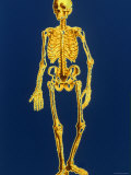 Digitized Full-Body Skeleton