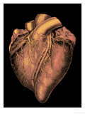 Heart Historic Cardiac Colorized