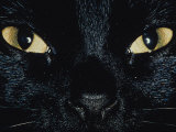 Close Up of Eyes and Nose of Black Cat