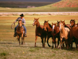 Cowboy Riding Horse While Corralling Horses into a Pasture