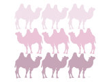 Pink Camel Family