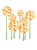 Orange Alliums