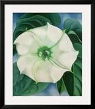 Jimson Weed  1932