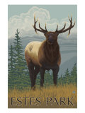 Estes Park  Colorado  Elk Scene