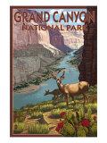 Grand Canyon National Park  Arizona  Deer Scene