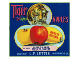 Tiger Brand Apple Label  Watsonville  California