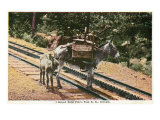 Pikes Peak  Colorado  View of a Mule that Helped Build the Pikes Peak Railroad