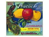 Peacock Brand Apple Label  Watsonville  California