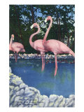 St Petersburg  Florida  View of Pink Flamingos at Florida Wild Animal Ranch