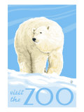 Visit the Zoo  Polar Bear Solo