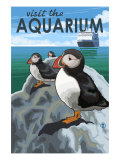 Visit the Aquarium  Pacific Puffins Scene