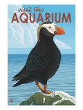 Visit the Aquarium  Tufted Puffin Scene