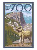 Visit the Zoo  Big Horned Sheep Scene