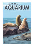 Visit the Aquarium  Sea Lions Scene