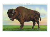 Buffalo  New York  Greetings From with a Buffalo