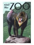 Visit the Zoo  Mandrill Scene