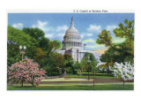 Washington DC  Exterior View of the US Capitol Building at Blossom Time
