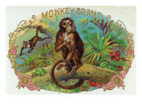 Monkey Brand Cigar Box Label