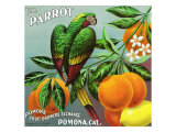 Pomona  California  The Parrot Brand Citrus Label