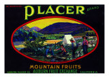 California  Placer Mountain Fruits Brand Appel Label