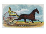Rarus Brand Cigar Box Label  Horse Racing