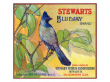 San Bernardino  California  Stewarts Bluejay Brand Citrus Label