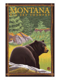 Montana  Big Sky Country  Black Bear in Forest