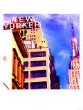 New Yorker  New York