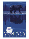Montana  Big Sky Country  Bear at Night
