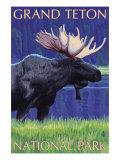 Grand Teton National Park  Wyoming  Moose in the Moonlight