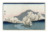 Grove of Cherry Trees  Japanese Wood-Cut Print