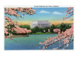 Washington DC  View of the Lincoln Memorial through Blossoming Cherry Trees