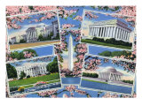 Washington  DC  Views Memorials  Monuments  White House and Blossoming Cherry Trees