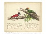 Woodpecker Verse