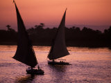 Traditional Feluccas Set Sail on the Nile River  Egypt