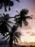 Tropical Beach and Palm Trees at Sunset  Seychelles