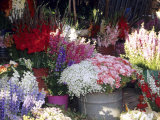 Bunch of Flowers at the Market  Madagascar