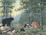 Bears&#39; Campsite