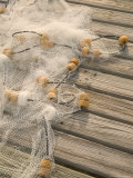 Fishing Nets on Town Pier  Loyalist Cays  Abacos  Bahamas