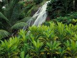 Shaw Park Gardens  Jamaica  Caribbean